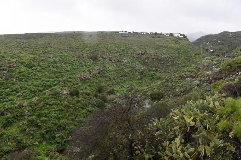 Estado del campo grancanario tras el paso de Filomena