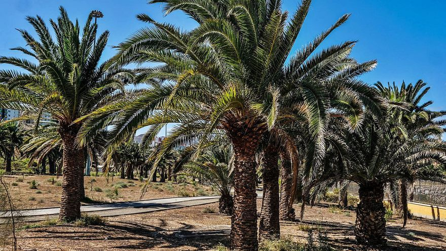 La OMS 'recomienda' a Santa Lucía y Telde por sus espacios verdes
