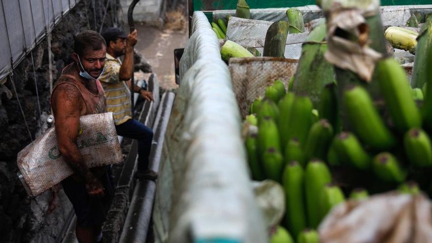 Asprocan pide a Calviño 30 millones para el transporte del plátano