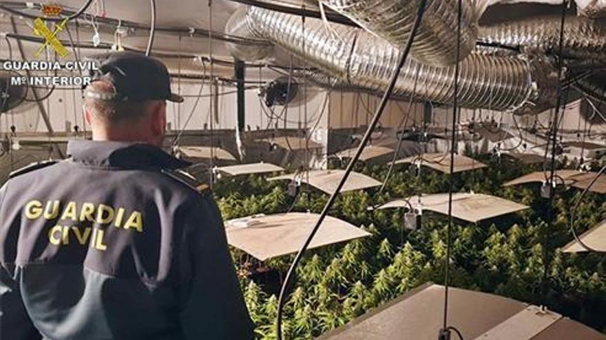 Desarticulada una banda criminal dedicada al cultivo y tráfico de drogas