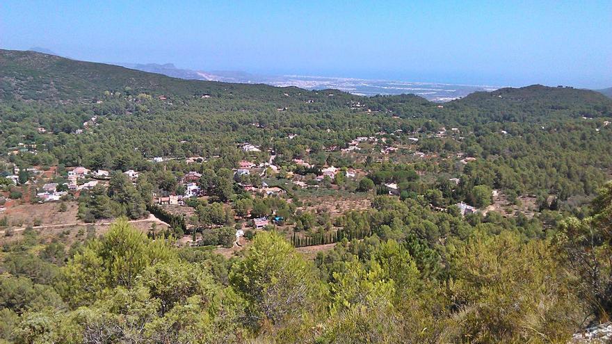 La 'Xylella' que destroza los almendros llega a València y pone en alerta al sector agrario