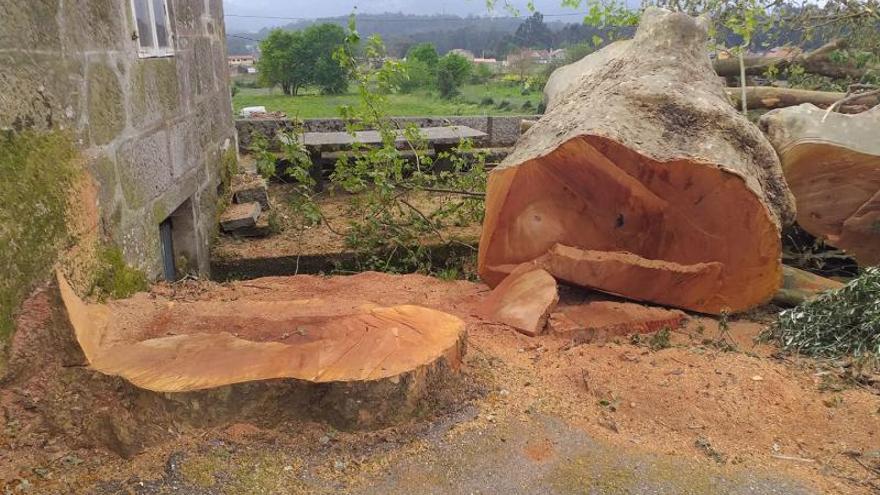 """La Iglesia derriba un árbol centenario en Guillarei porque """"ponía en riesgo"""" la caseta parroquial"""