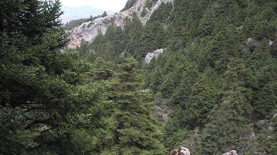 La presidenta de la Junta Rectora de Sierra de las Nieves destaca los beneficios del Parque Nacional