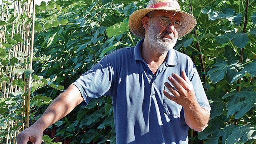 Tricks und Tipps für Jungpflanzen im Mallorca-Garten