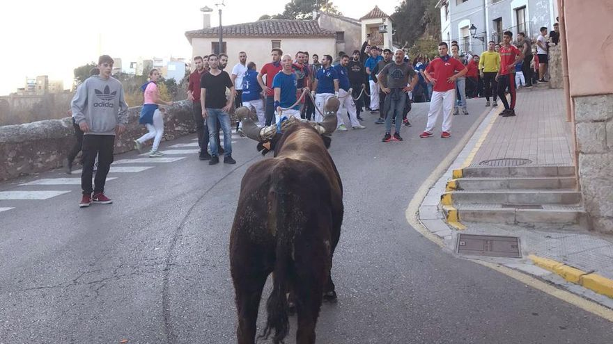 """La Vall d'Uixó, """"capital"""" del toro cerril"""