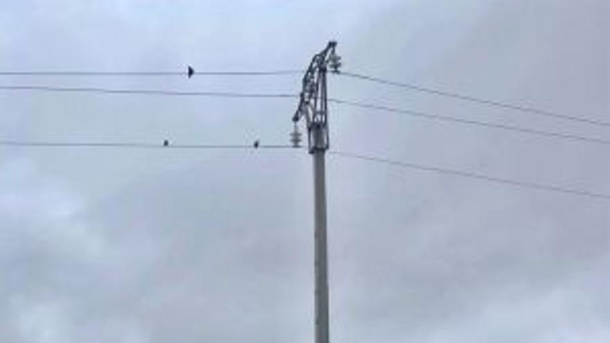 Alboraia logra que se mejoren los protocolos de ubicación de las torres eléctricas en la huerta