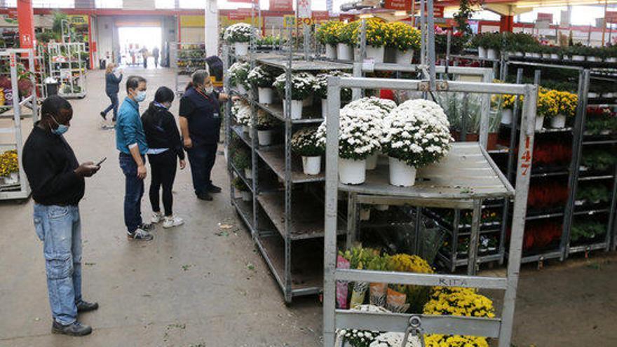 Els floricultors confien en Tots Sants i Nadal per equilibrar