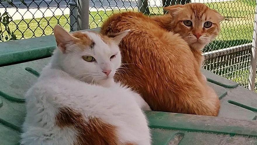 Les adopcions de gats han tret pressió a la protectora