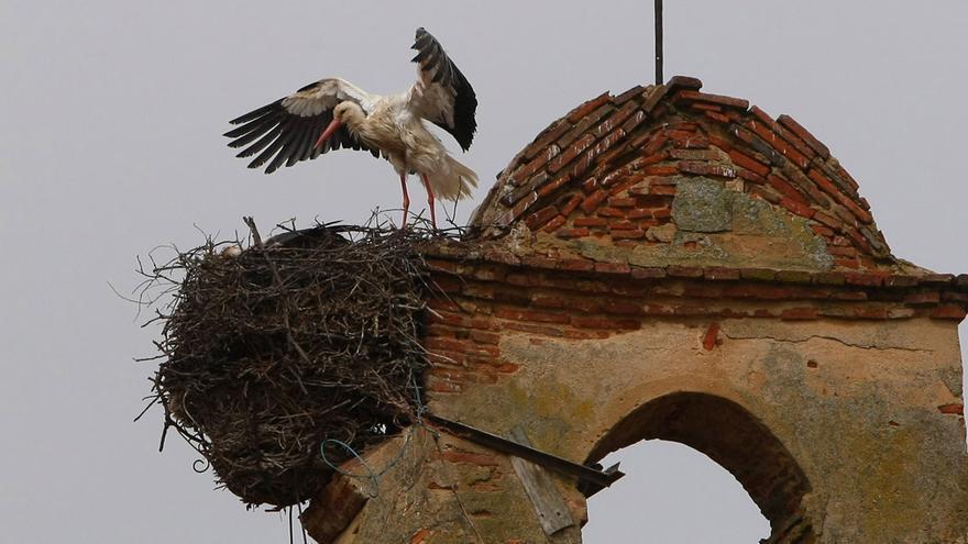 La retirada de nido de cigüeña de un ayuntamiento, denunciada ante la Junta de Castilla y León