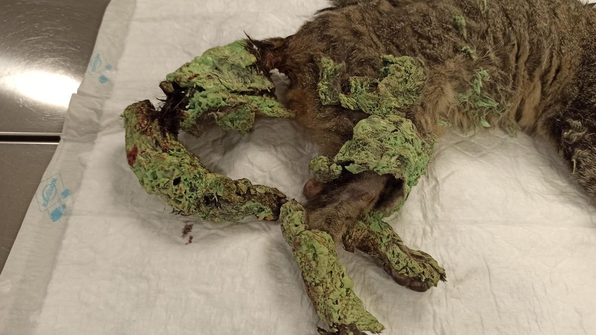 Estado en el que encontraron a la gata rociada con poliuretano en el Puerto de Alicante.