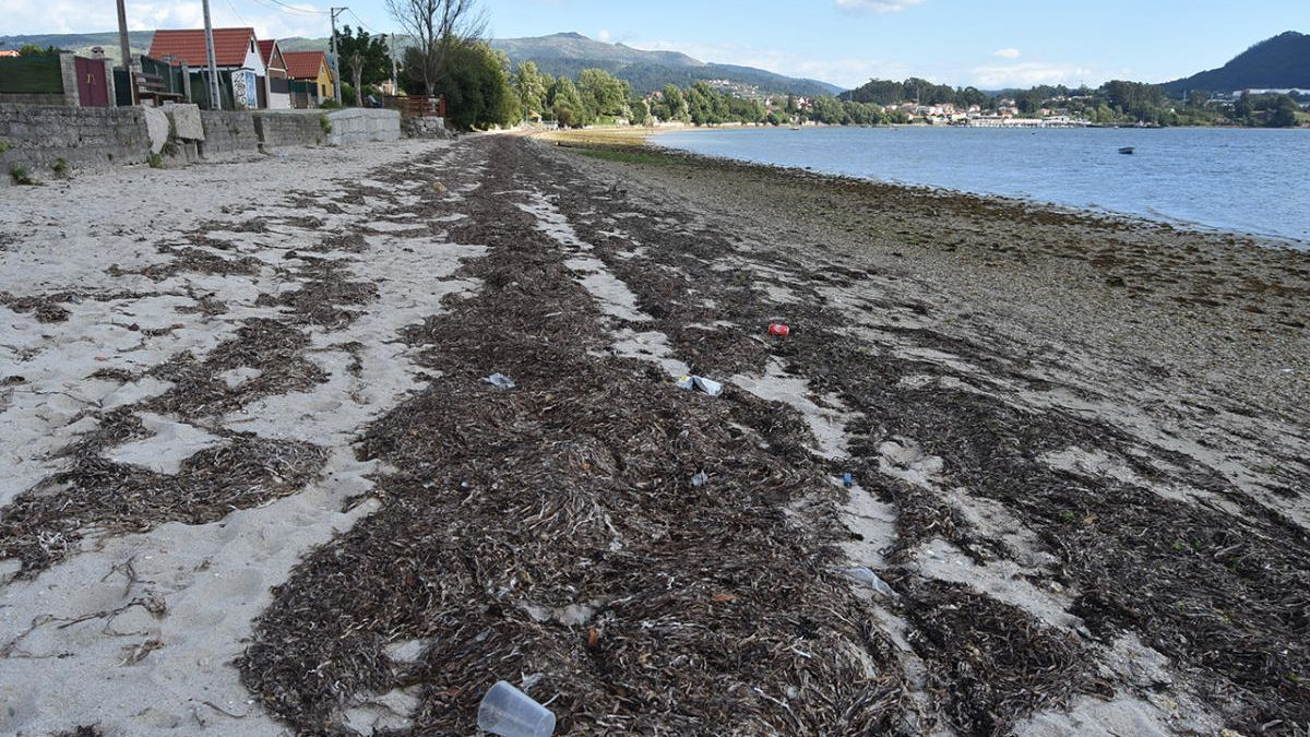 La playa de Cesantes, ayer, llena de algas secas en el tramo entre A Punta y el puerto.