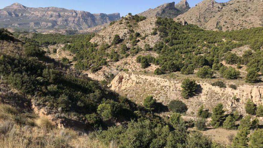 ¿Vas a visitar la montaña esta Semana Santa? El Ayuntamiento de Alicante muestra cómo actuar ante un incendio forestal