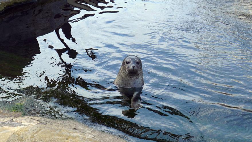 Nace una foca en el Oceanogràfic