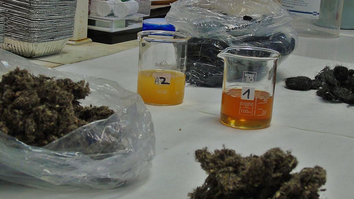 Anàlisis del pèl de les peces tractades en el procés d'investigació   UDL