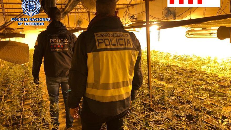 Registran naves y locales en Oviedo y Gijón en operación contra el tráfico internacional de marihuana