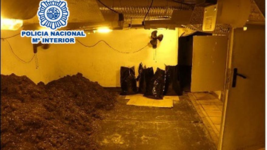 Desmantellen una plantació de marihuana en una casa d'Esparreguera