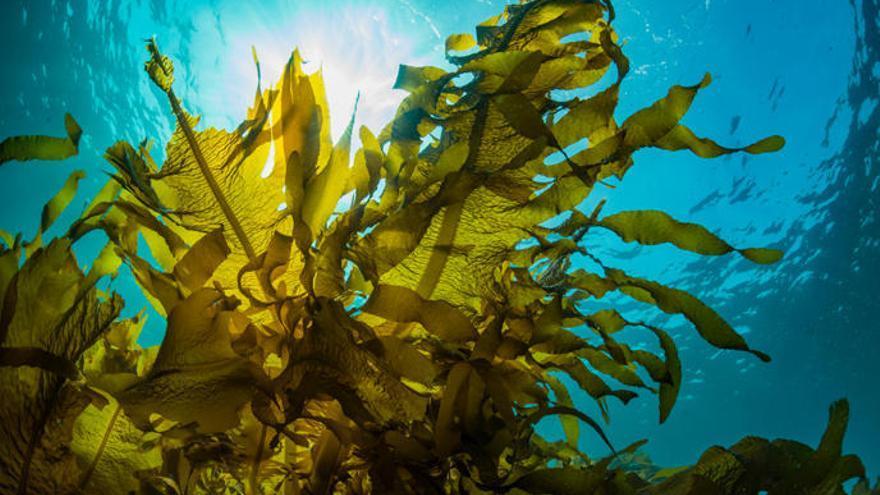La evidencia más temprana de animales resulta ser de algas