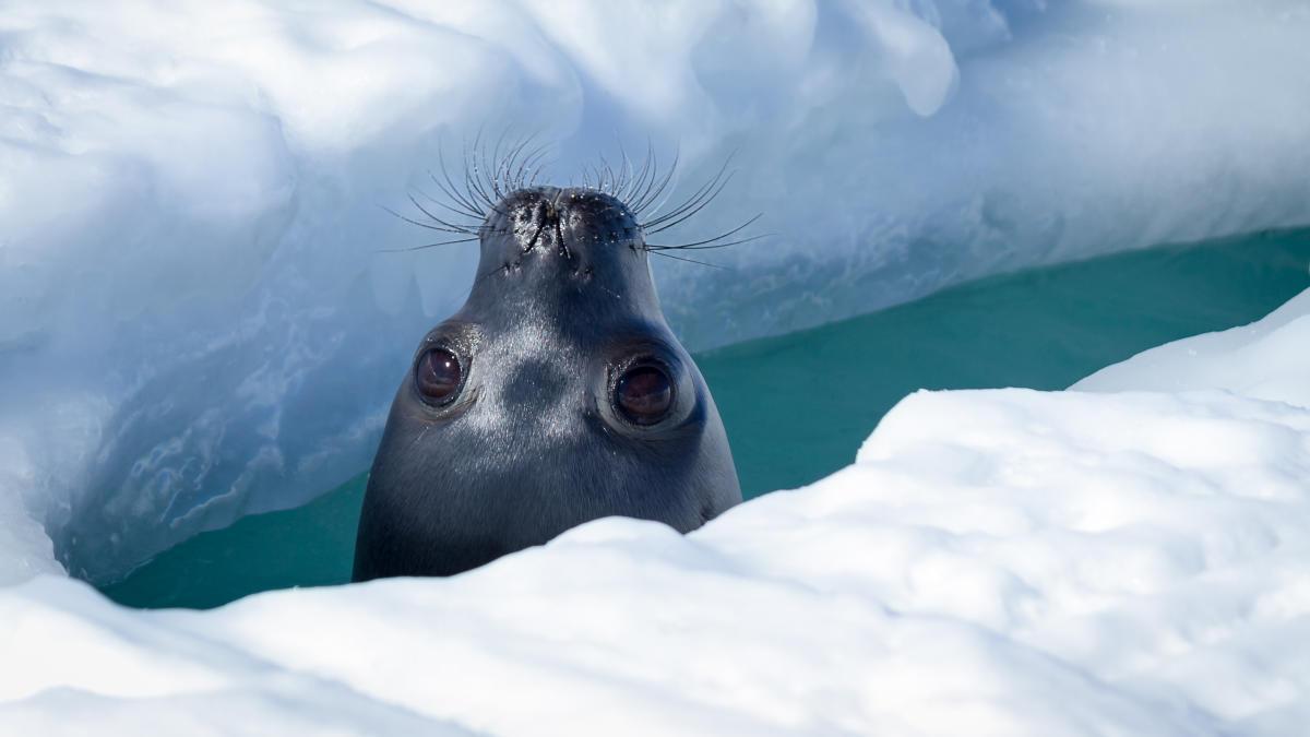 Por qué foca debería ser un piropo en vez de un insulto