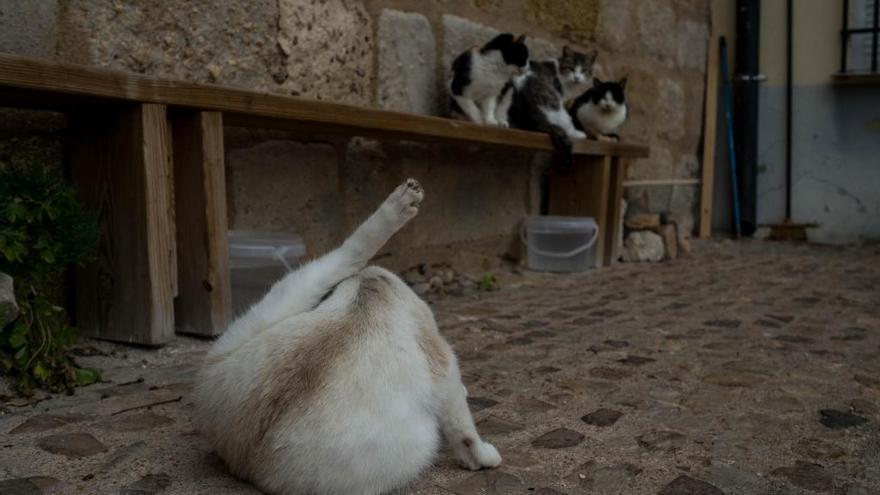 Ayuntamiento y DAZ vuelven a colaborar en la gestión de las colonias felinas de Zamora