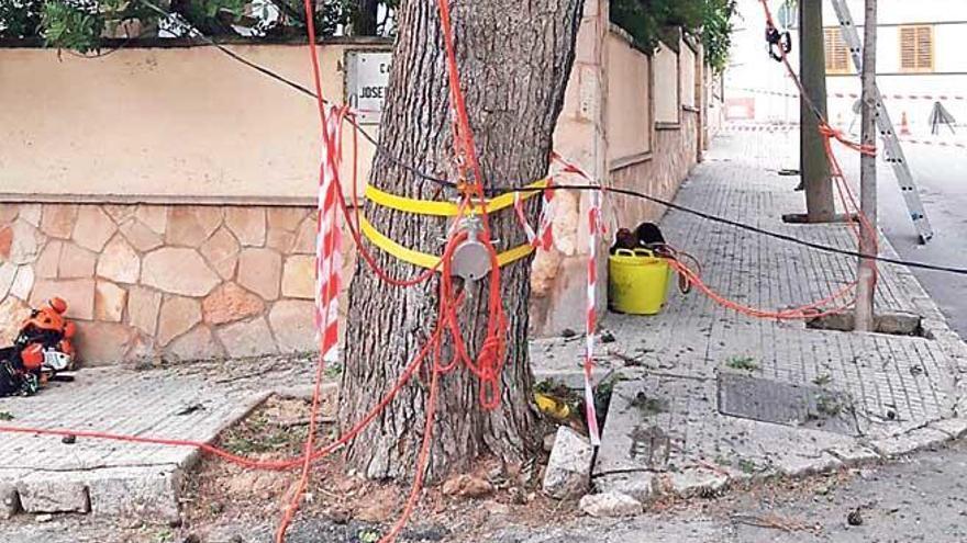Cort intensifica las inspecciones del arbolado en situación de riesgo debido a las lluvias
