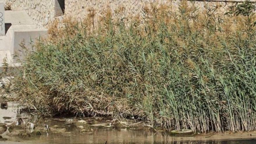 El Ayuntamiento considera que la limpieza del barranco de las Ovejas es del Júcar