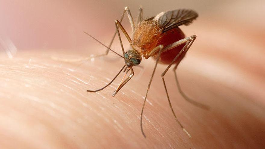 El truco definitivo para librarte de moscas y mosquitos en casa este verano