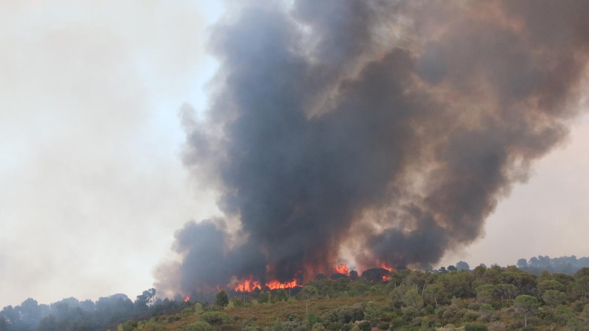 Flames i fum de l'incendi forestal a Martorell i Castellví de Rosanes