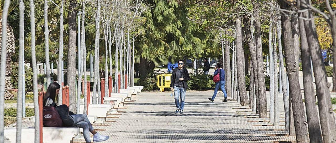 Imagen del campus de la UA practicamente vacío.
