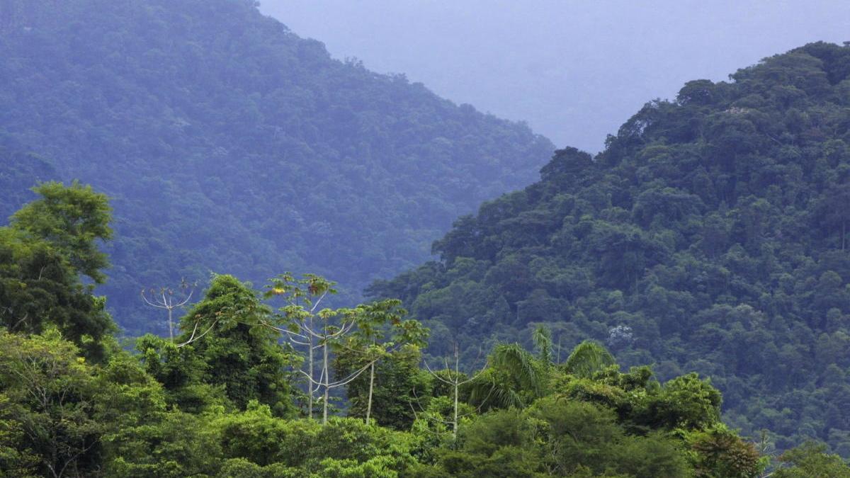 Una parte de la selva amazónica en Brasil