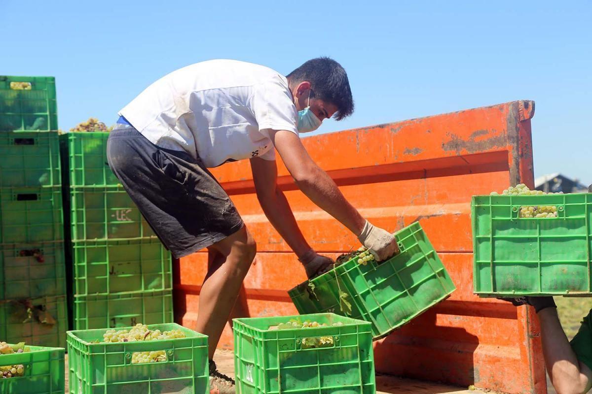 La alerta sanitaria marca el arranque de la vendimia en Montilla-Moriles