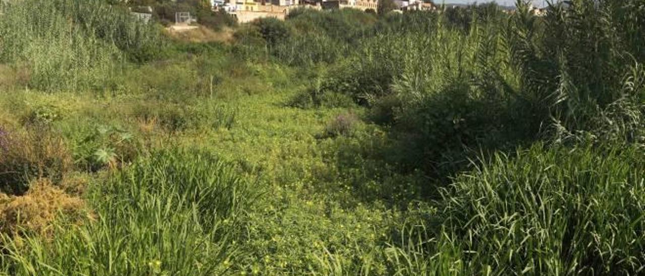 Una planta invasora cubre el Albaida