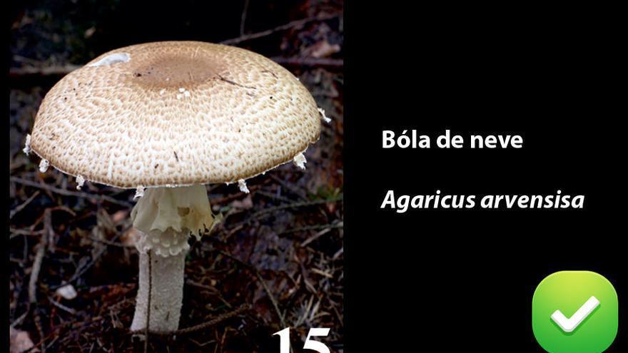 Guía de setas comestibles en Galicia