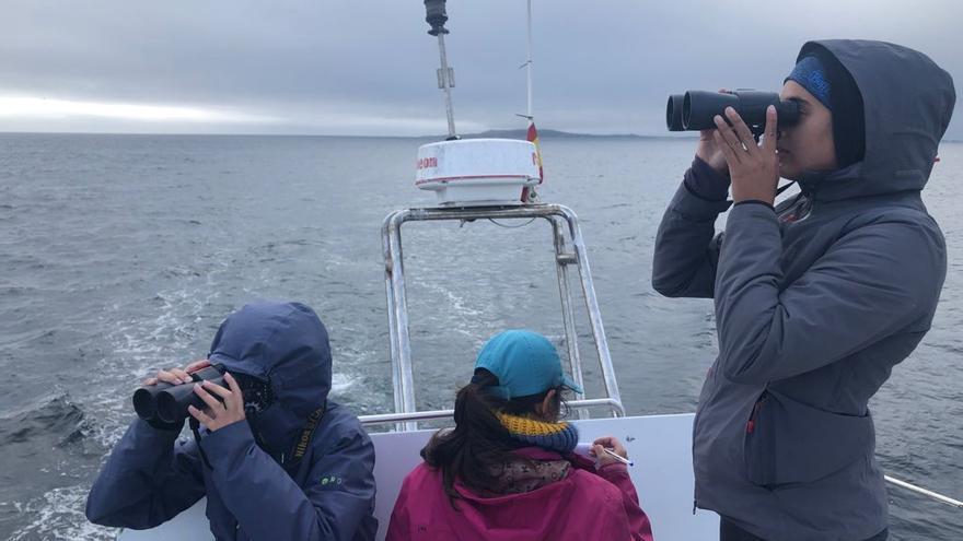 Las orcas y un tiburón blanco movilizan a Salvamento y a la comunidad científica