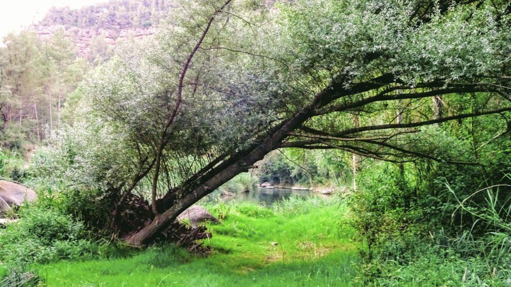 Un bonic racó del riu Cardener.