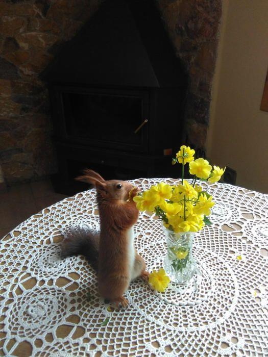 Romanticisme. La primavera ja és aquí i aquest simpàtic esquirol és d'allò més romàntic olorant les flors.