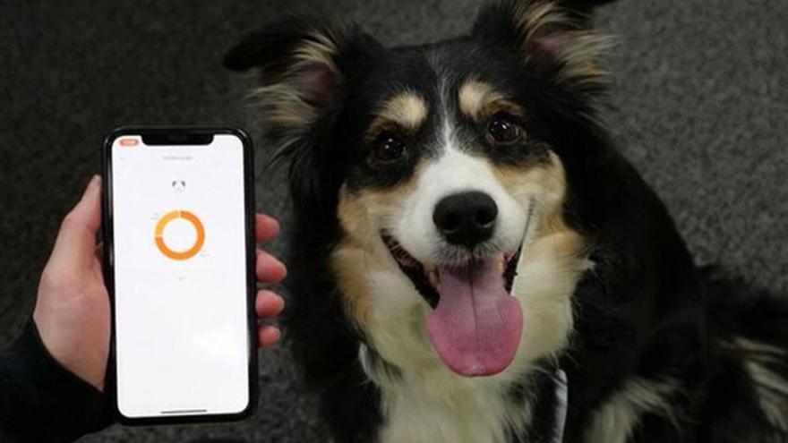 Un collar para perros desarrollado informa sobre su estado de ánimo