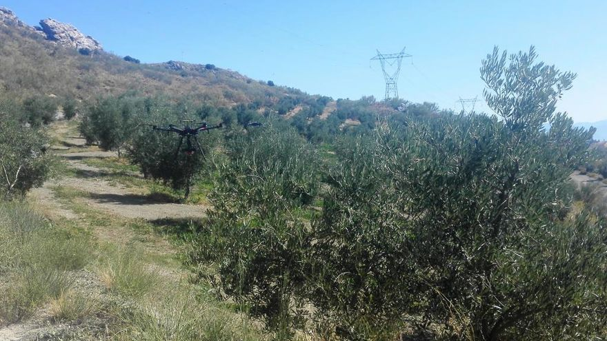 Drones para analizar el estado de los olivares andaluces