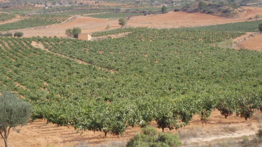 """Agricultura apoya al sector del cava para que el Consejo Regulador acepte la comercialización con el nombre """"Requena"""""""