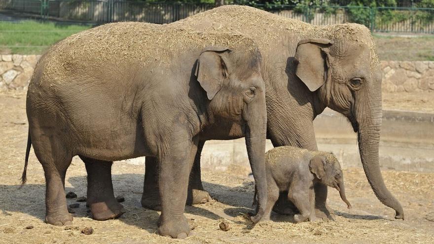 Continúa el misterioso viaje de una manada de elefantes a través de China