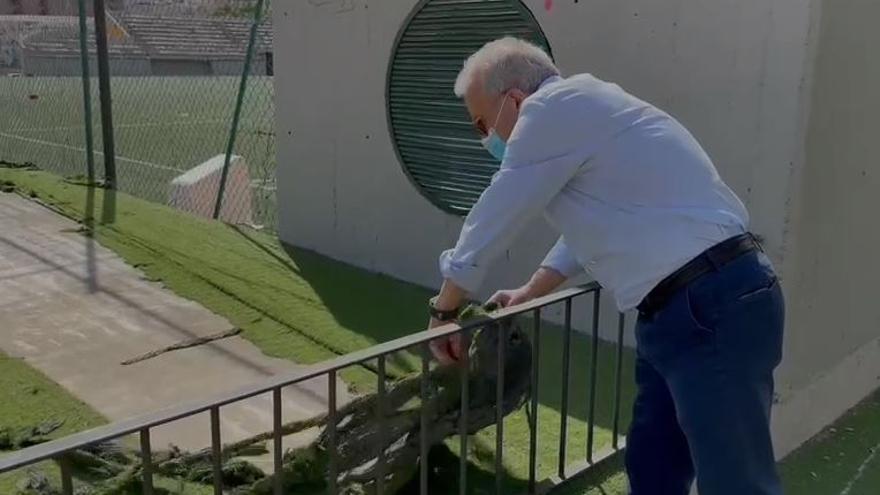 """Coello denuncia el """"patético"""" estado del exterior del polideportivo José Barnés"""