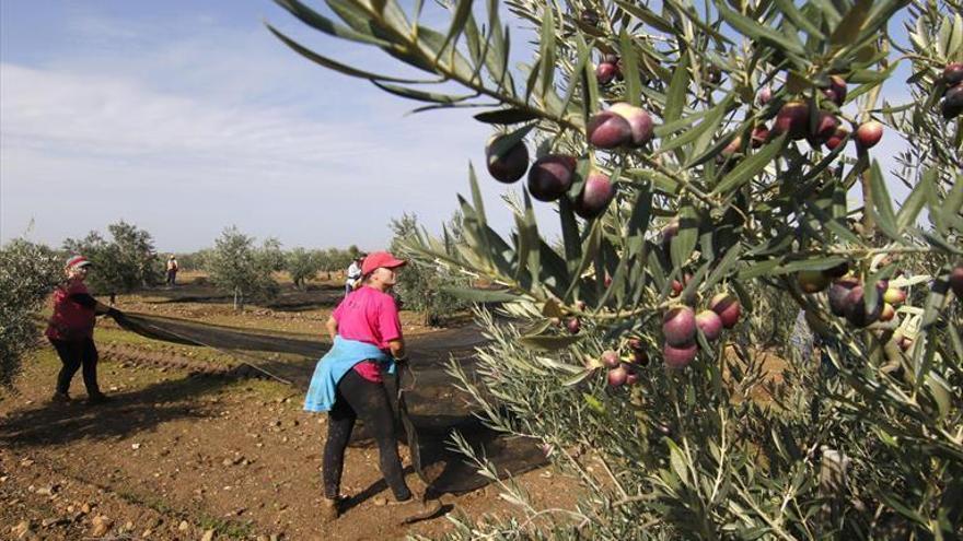 Agricultura abre el plazo para solicitar ayudas para jornadas técnicas agroganaderas