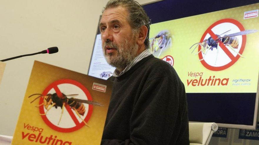 La Diputación edita 3.000 trípticos sobre la avispa asiática