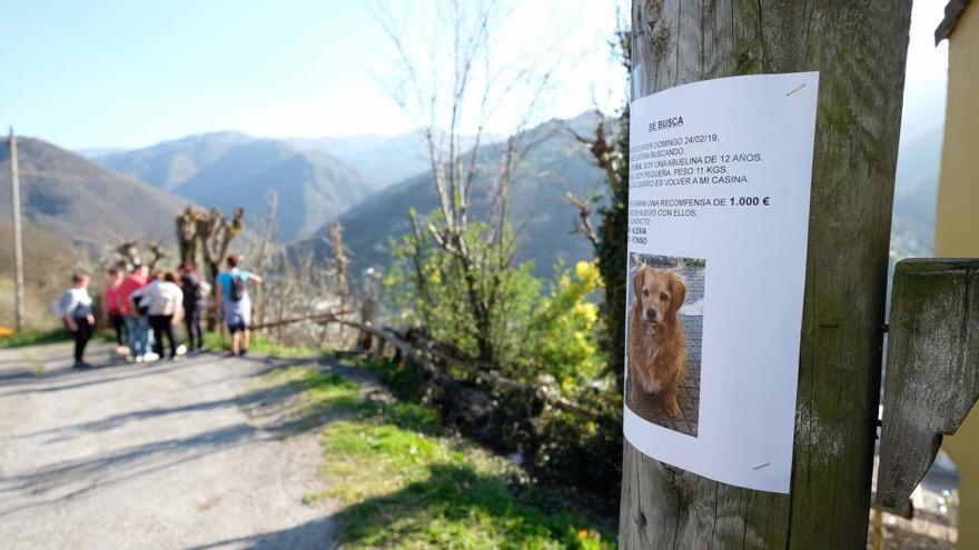 """Una familia allerana ofrece 1.000 euros por su perrita """"Yuna"""", perdida el domingo"""
