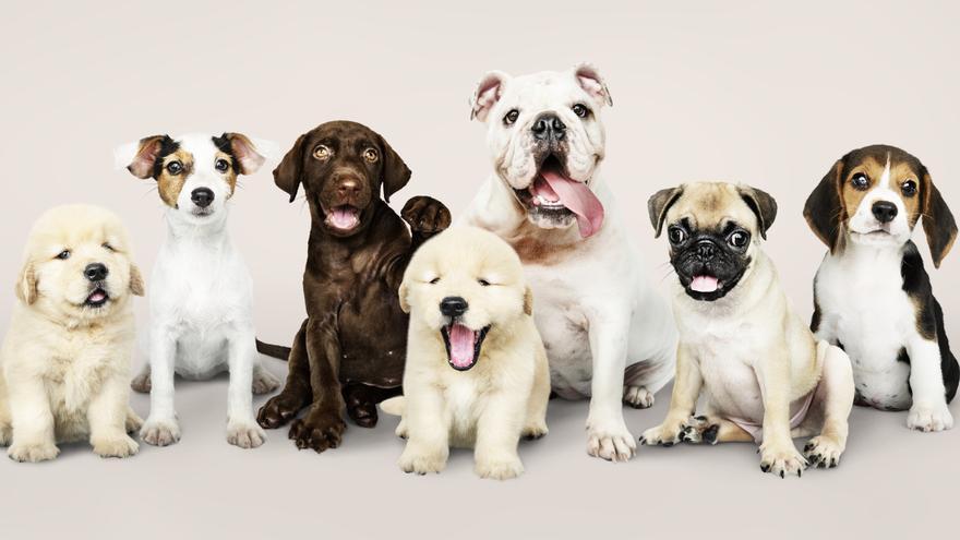 Día Mundial del Perro: 8 espacios en Alicante que cuidan de tu mascota