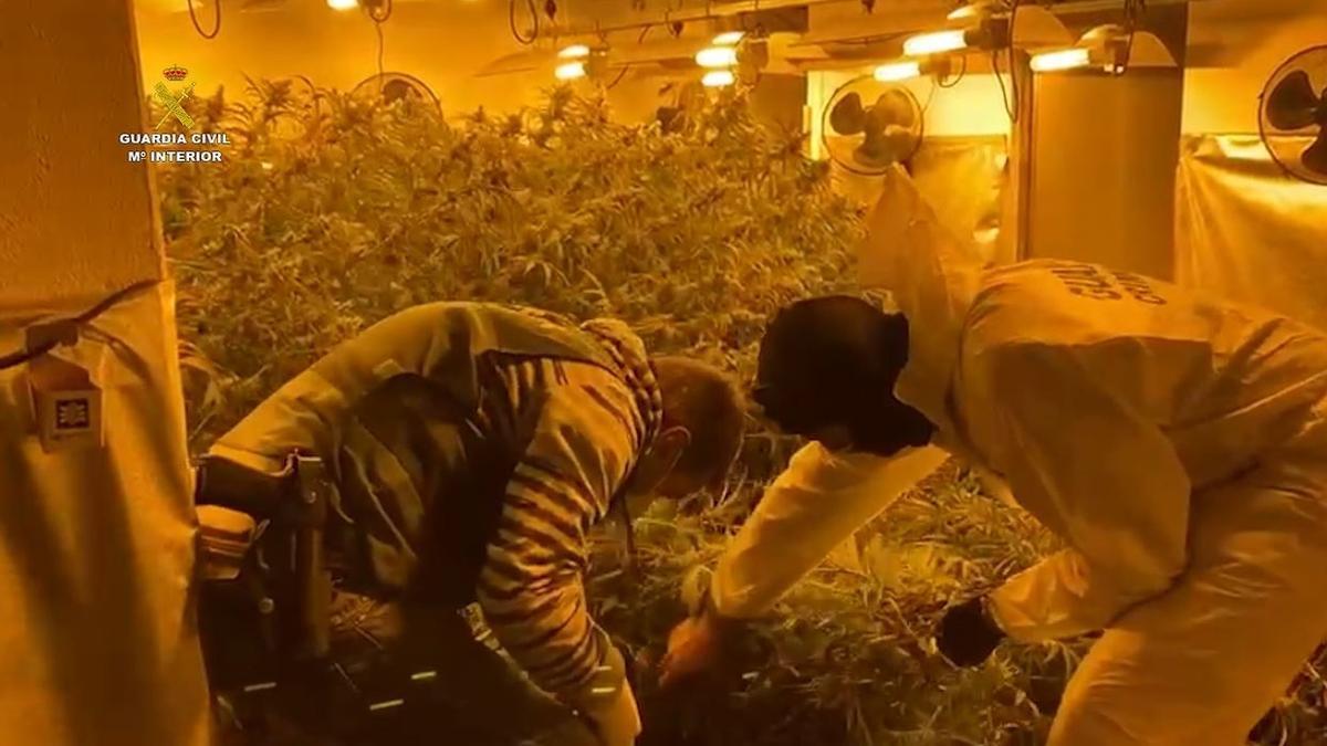 Foto de archivo de unos guardias civiles en una intervención en una plantación de marihuana indoor en una vivienda.