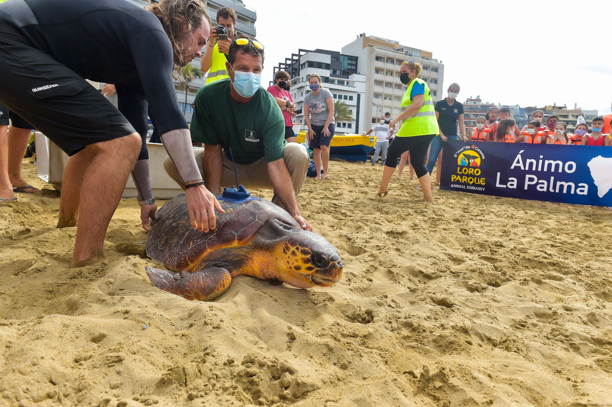 Suelta de la tortuga 'Macho' en Las Canteras