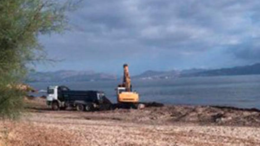 Auch in Son Serra de Marina wird jetzt das Seegras vom Strand entfernt