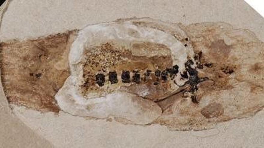 Un fósil de renacuajo revela que murió con violencia