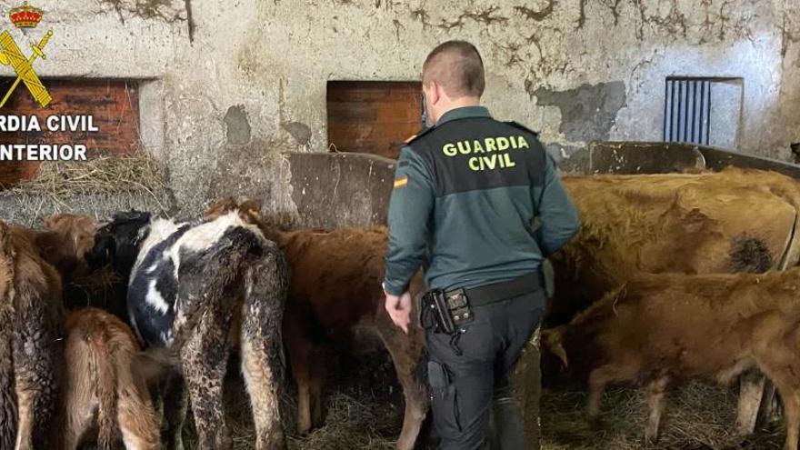 Localizan a más de 18 animales muertos en dos fincas en Asturias
