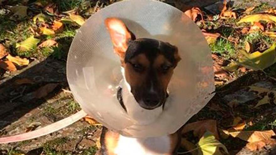 Pionera orden de alejamiento en Galicia a los dueños de una perra maltratada en Lugo